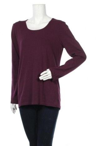Γυναικεία μπλούζα Michele Boyard, Μέγεθος XL, Χρώμα Βιολετί, 95% βαμβάκι, 5% ελαστάνη, Τιμή 12,34€