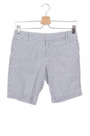 Γυναικείο κοντό παντελόνι Jones New York, Μέγεθος XS, Χρώμα Μπλέ, Βαμβάκι, Τιμή 22,27€