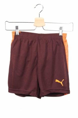 Detské krátke nohavice  PUMA, Veľkosť 9-10y/ 140-146 cm, Farba Hnedá, Polyester, Cena  14,47€