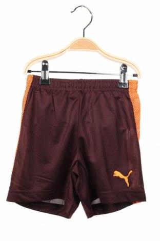 Dětské krátké kalhoty  PUMA, Rozměr 5-6y/ 116-122 cm, Barva Hnědá, Polyester, Cena  407,00Kč