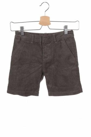 Παιδικό κοντό παντελόνι Gocco, Μέγεθος 5-6y/ 116-122 εκ., Χρώμα Γκρί, 70% βαμβάκι, 28% πολυεστέρας, 2% ελαστάνη, Τιμή 9,28€